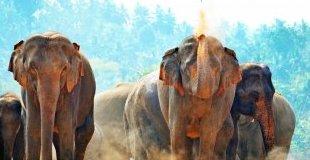 Шри Ланка и Дубай  - перлите на Азия, с водач от България!