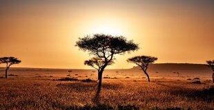 Екскурзия в КЕНИЯ - Магията на Африка - Сафари в Кения
